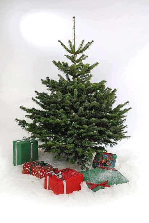 Ihr Weihnachtsbaum aus Willich